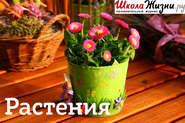 Путаница, или Почему так назвали цветы?