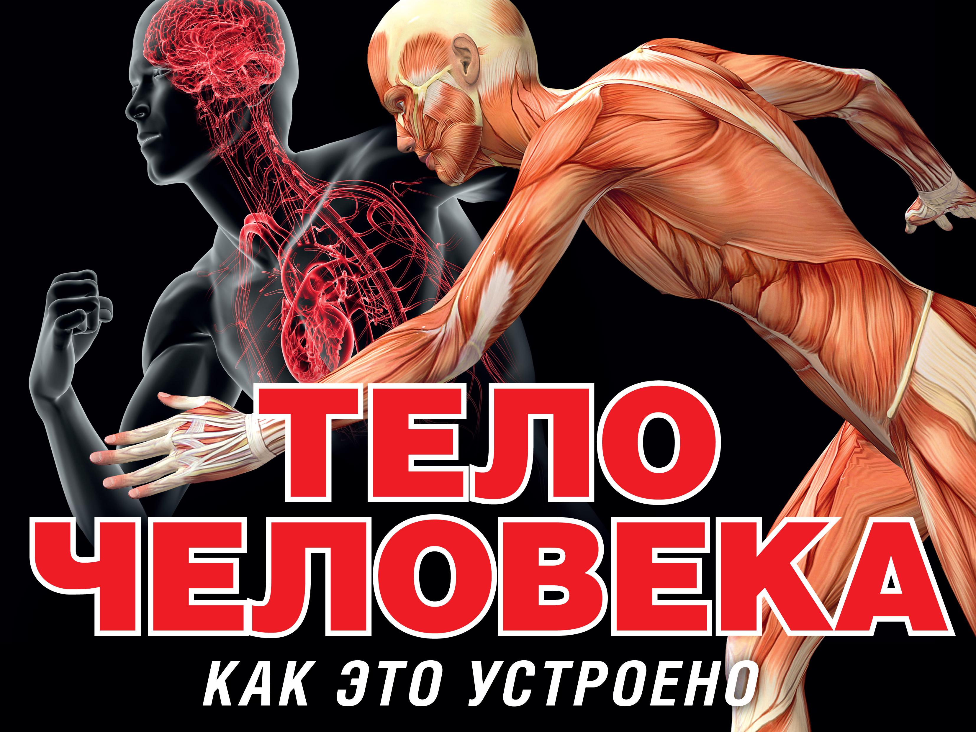 Питер Маврикис Тело человека томас канаван тело человека энциклопедия для маленьких почемучек