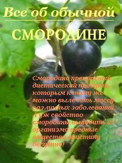 Иван Дубровин Все об обычной смородине цена и фото