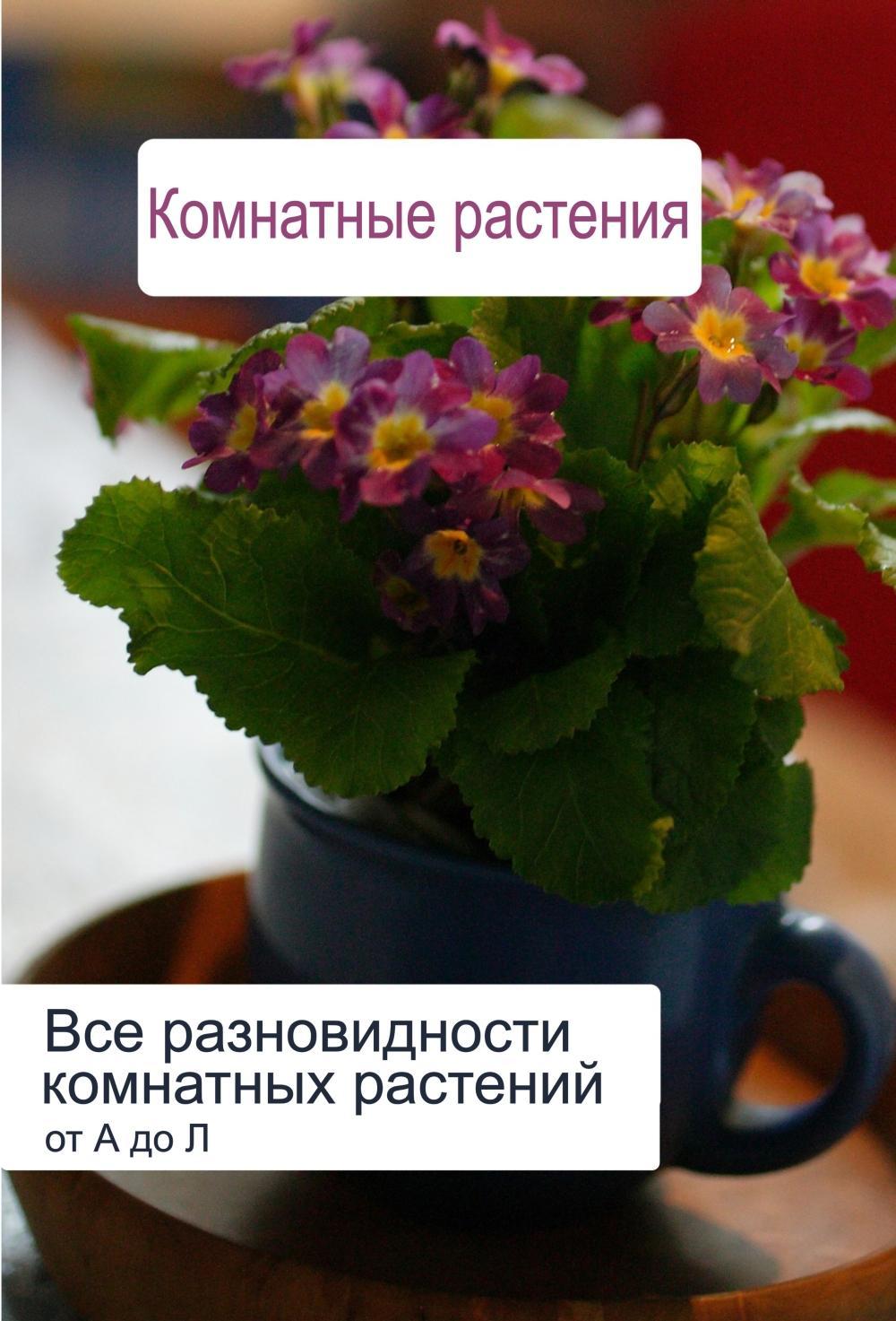 Илья Мельников Все разновидности комнатных растений (от А до Л) лейка для комнатных растений