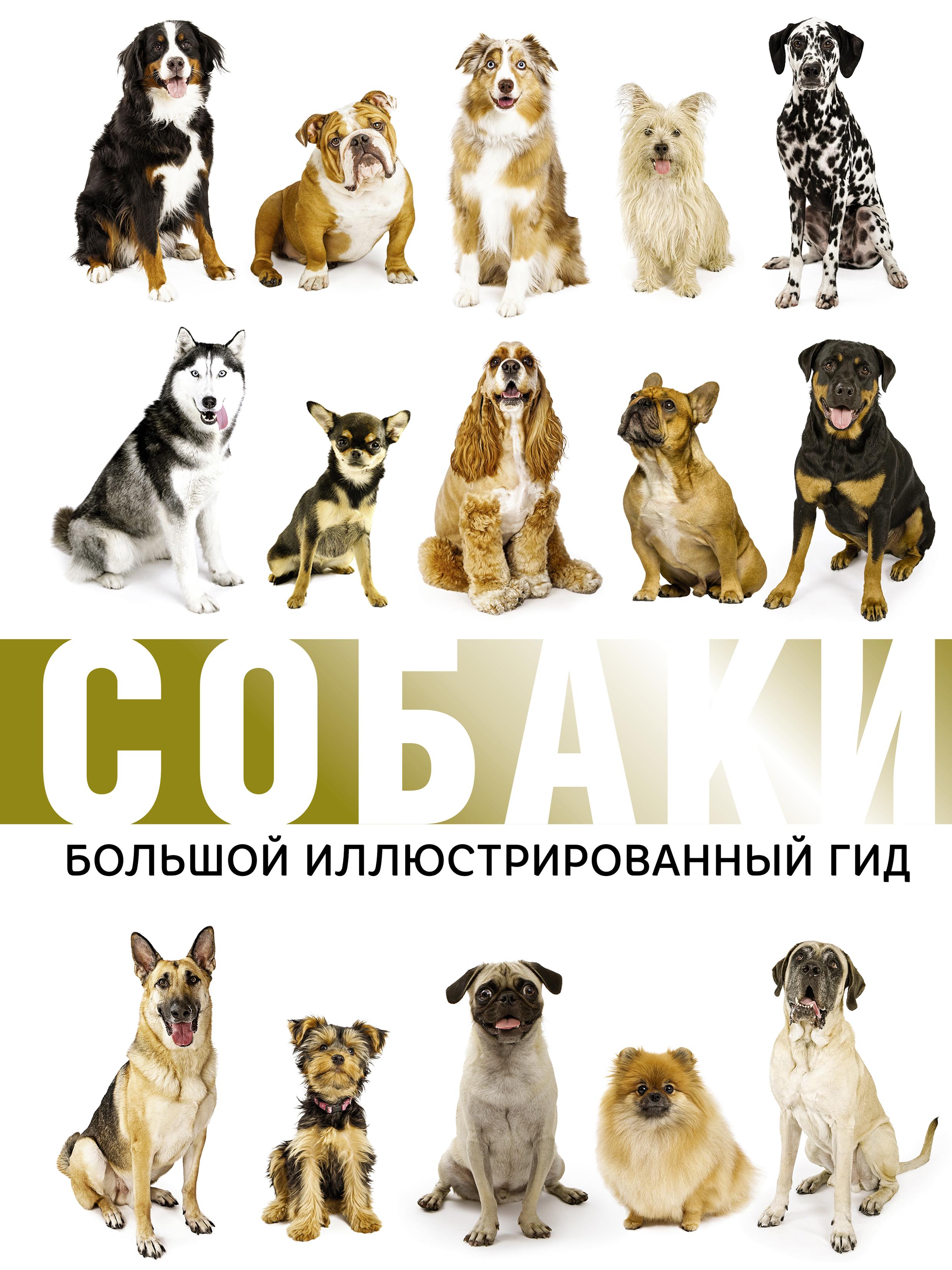 Фото - М. Д. Филиппова Собаки. Большой иллюстрированный гид спектор а лошади большой иллюстрированный гид