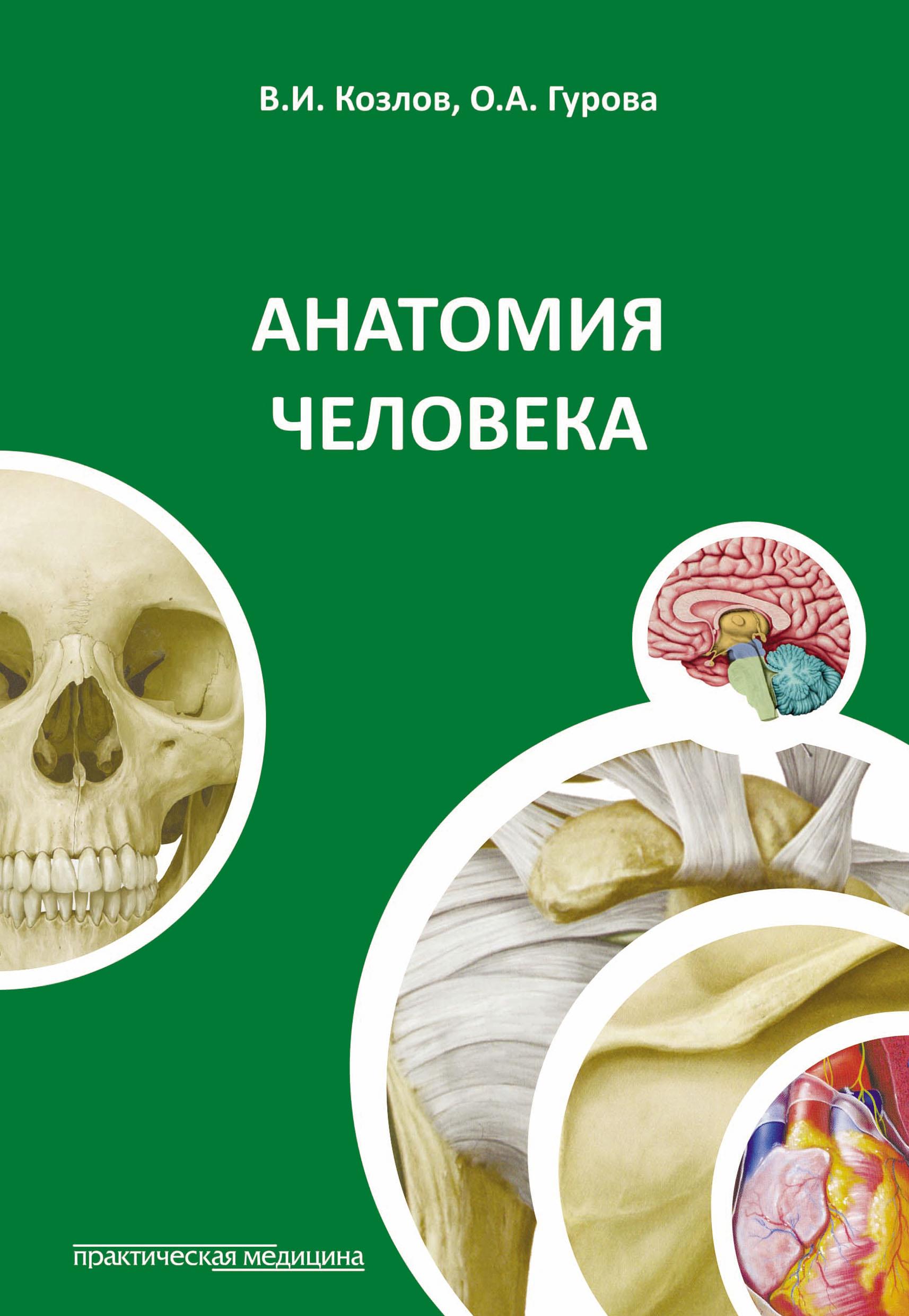 Ольга Гурова Анатомия человека