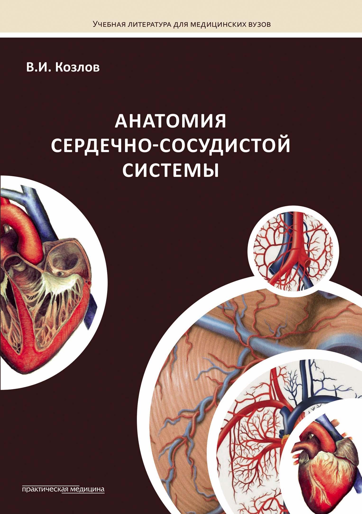 Валентин Козлов Анатомия сердечно-сосудистой системы