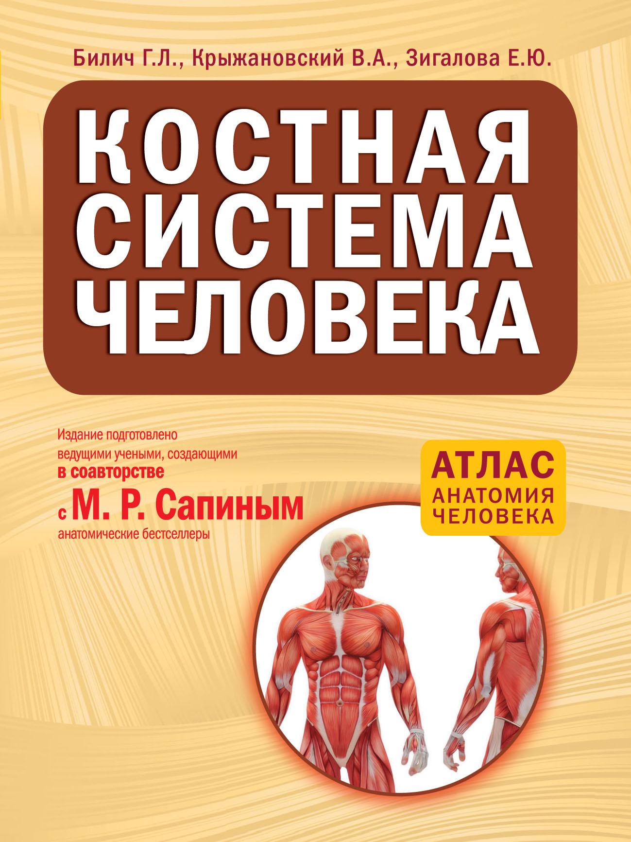 Г. Л. Билич Костная система человека винсент перез большой атлас анатомии человека