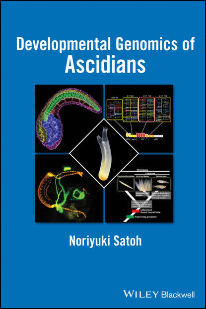 Noriyuki Satoh Developmental Genomics of Ascidians недорого