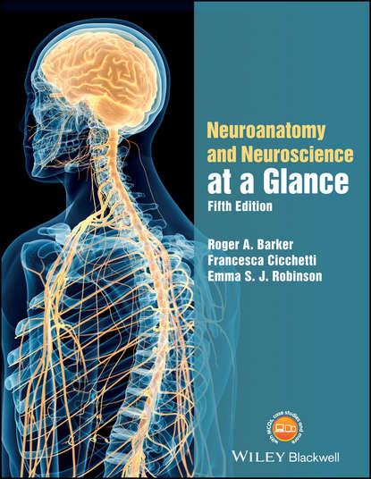 Francesca Cicchetti Neuroanatomy and Neuroscience at a Glance barker roger a neuroanatomy and neuroscience at a glance