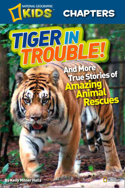 Kelly Halls Milner National Geographic Kids Chapters: Tiger in Trouble!: and More True Stories of Amazing Animal Rescues leslie kelly here comes trouble