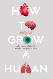 How to Build a Human: Adventures in How We Are Made and Who We Are