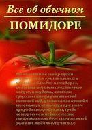 Все об обычном помидоре