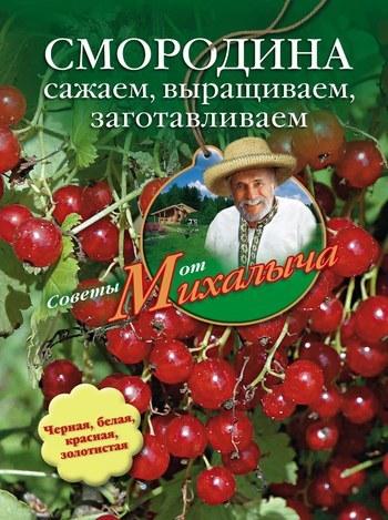 Читать книгу Смородина. Сажаем, выращиваем, заготавливаем